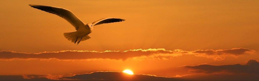 gull, bird, flying
